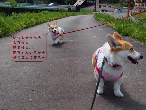 仕方なく歩く陽菜ちゃん