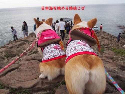 日本海ながめちう