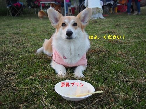 豆乳ぷりん