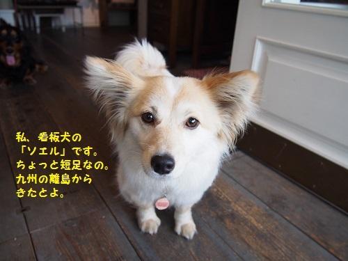 ソエルちゃん