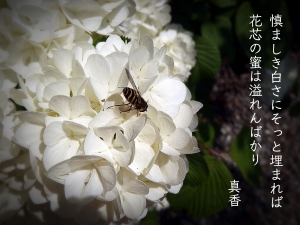 IMG_6335.jpg