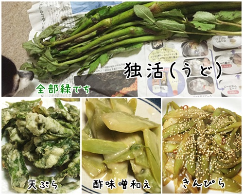 2017山菜