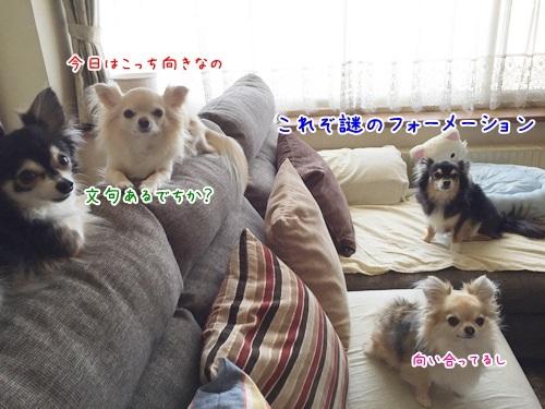 IMG_0890.jpg