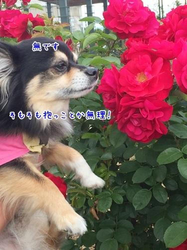 IMG_1447_201707061123334f5.jpg
