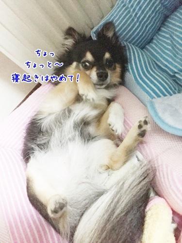 IMG_1568_20170706104447a5e.jpg
