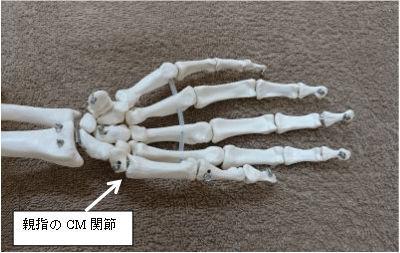 親指のCM関節