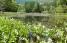 麓の池にはミツガシワが花盛り