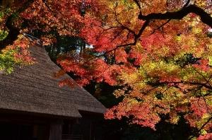 吉水亭の前から見た紅葉