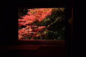 家の裏手から見た紅葉