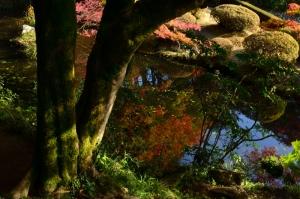 玉壺池に映った紅葉