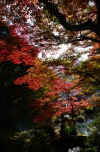 玉壺池と紅葉