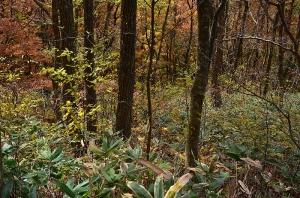 深入山 西側登山道の紅葉