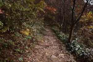 深入山西側登山道