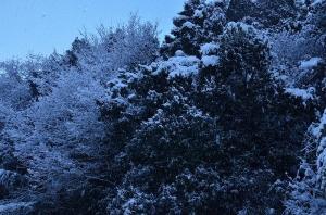 1月15日も降り続く雪