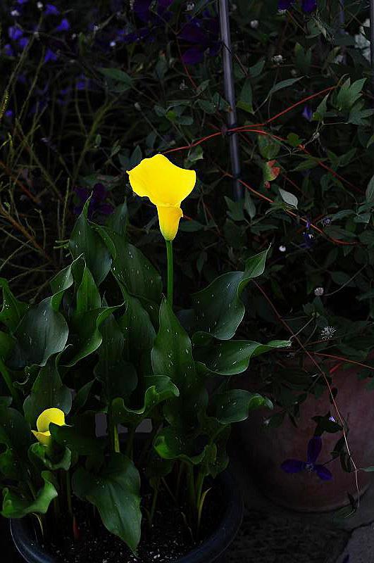 黄色のカラー01