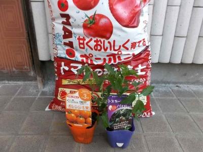 2017トマト01