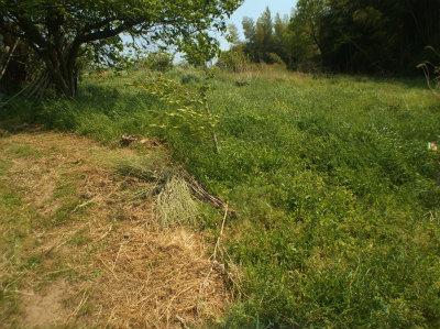 4.30草刈前