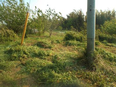 4.30北の端の草刈1