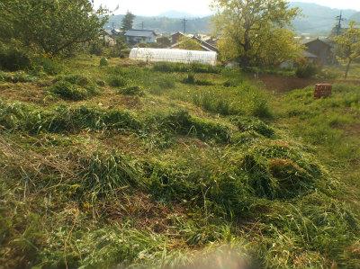 4.30北の端の草刈2