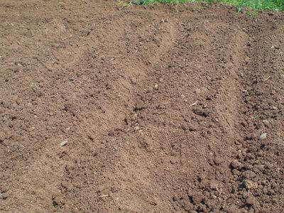 5.6雨で土がサラサラ