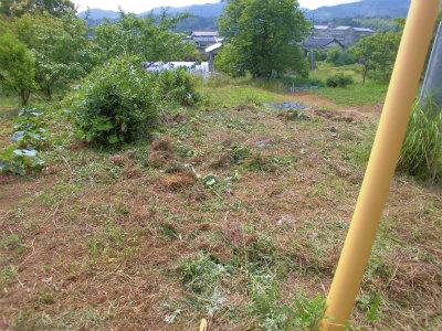 6.9畑北側の草刈後