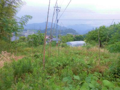 6.10耕作放棄地にはまた竹が