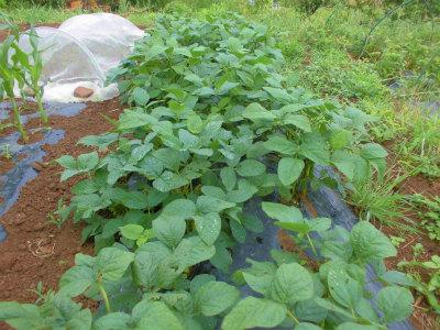 6.30枝豆