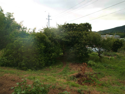 7.7畑真ん中の栗の木付近