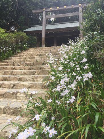 内宮前のシャガの花__H29.04.25撮影