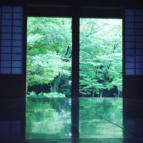 旧閑院宮邸・床みどり_H29.06.28撮影