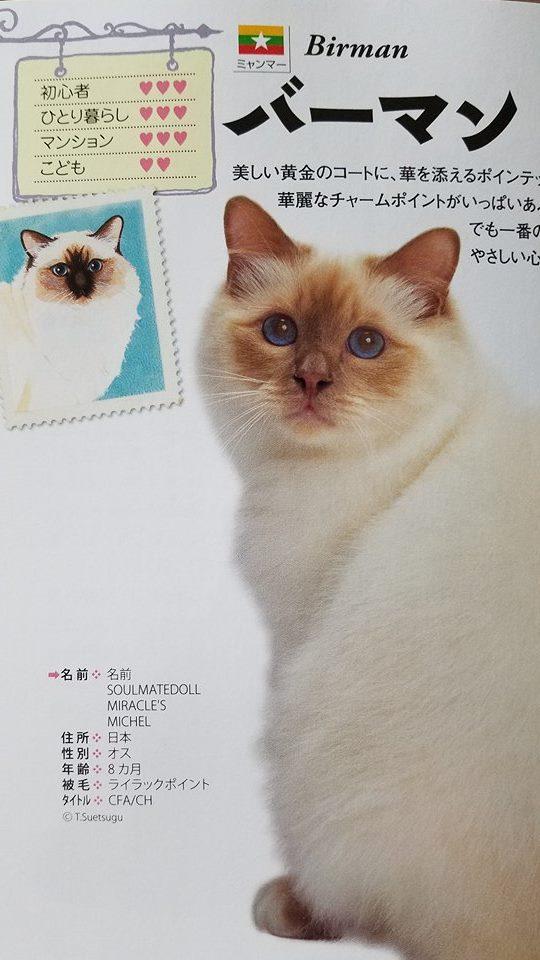 2017 日本と世界の猫カタログ