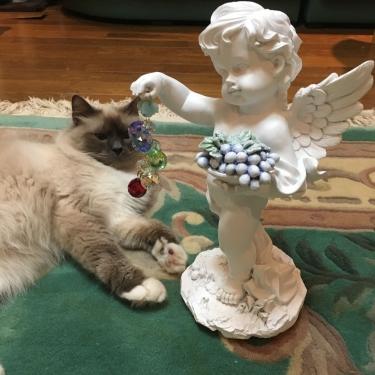 フルーツ天使と幸運を運ぶ猫バーマン