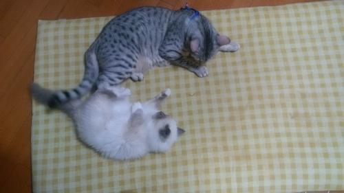 お兄ちゃん猫&ノートンちゃん