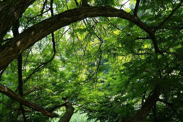 20170506_trees.jpg