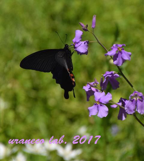 4月24日黒衣の貴婦人