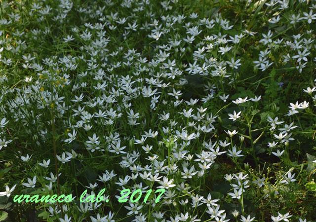 4月28日落羽松の森5