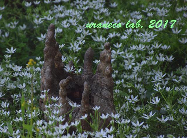 4月28日落羽松の森4