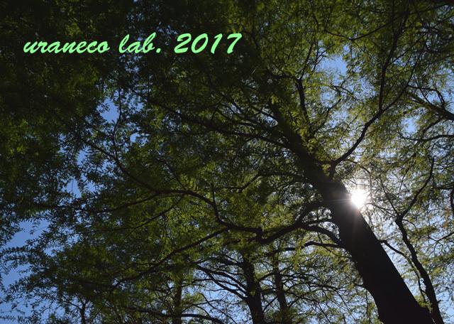 4月28日落羽松の森3