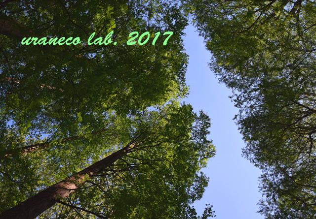 4月28日落羽松の森