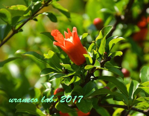 5月11日果樹園7