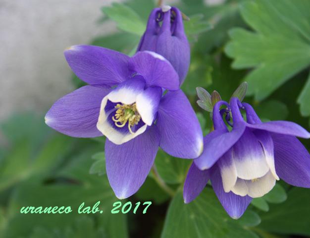 5月1日苧環姉妹