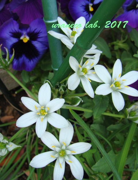 5月8日白と紫