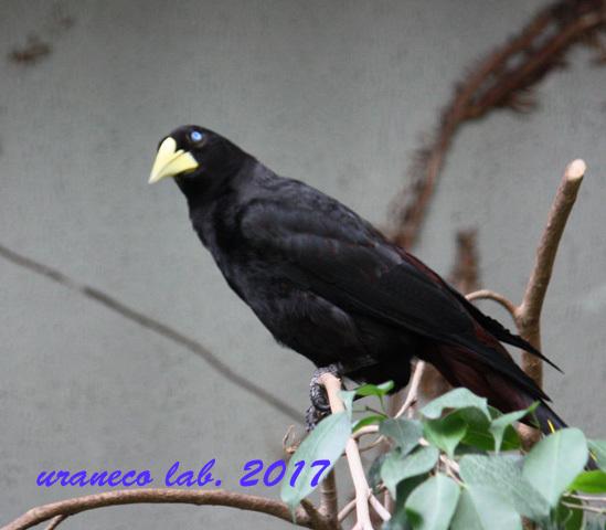 5月25日ガイジンの鳥5