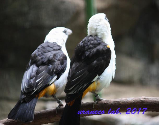 5月25日ガイジンの鳥4