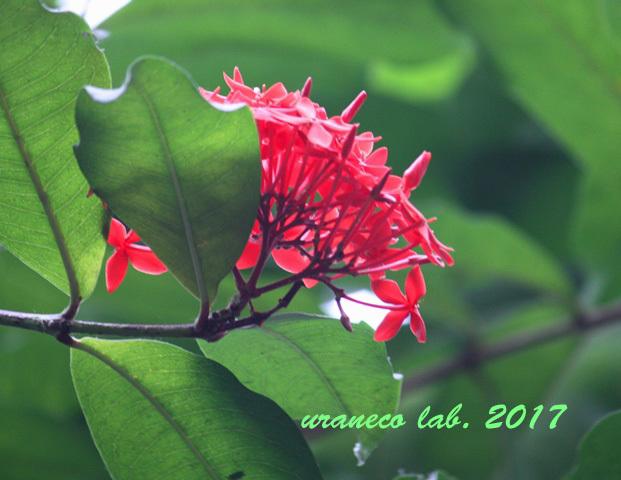 5月25日温室の花