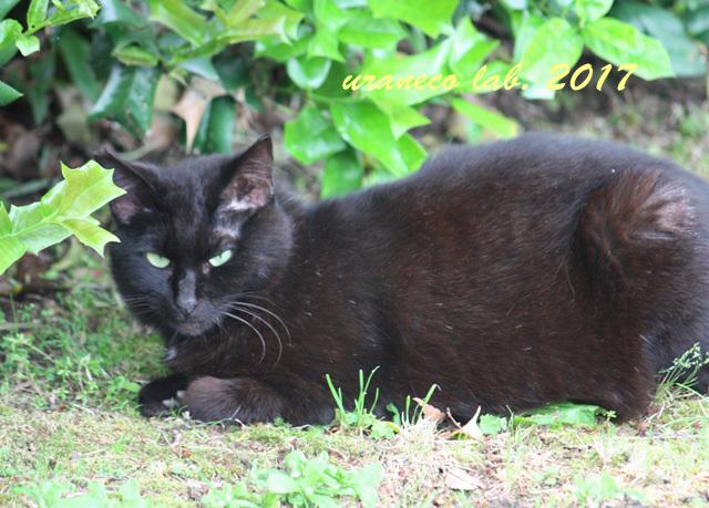 5月24日黒猫