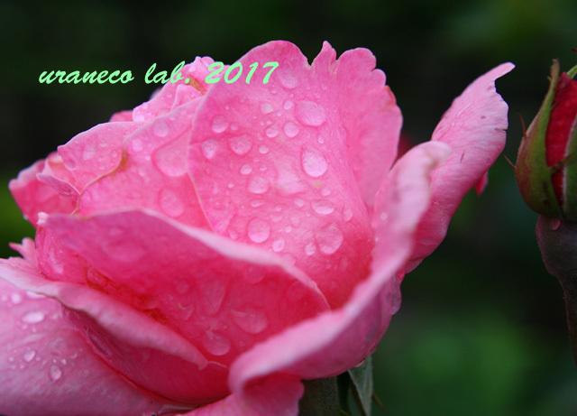 5月31日雨の日6
