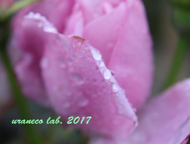5月31日雨の日5