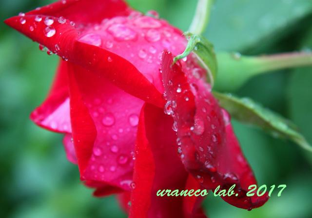 5月31日雨の日3