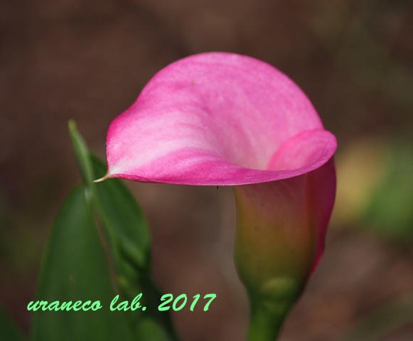 6月3日桃色カラー2